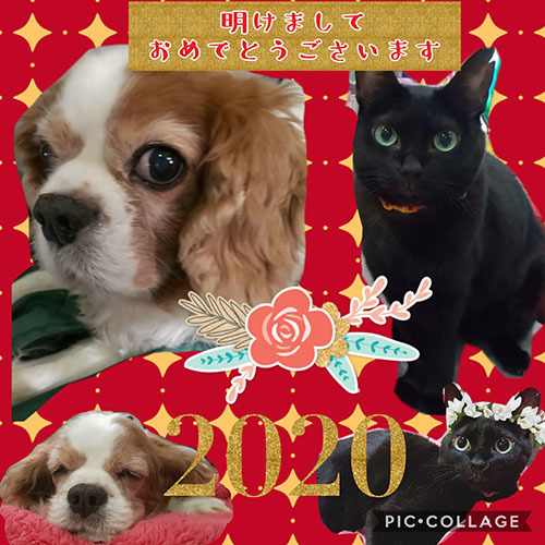 Collage 2019-12-29 08_26_39.jpg